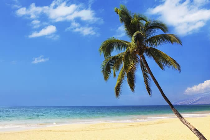Beach With A Palm Tree