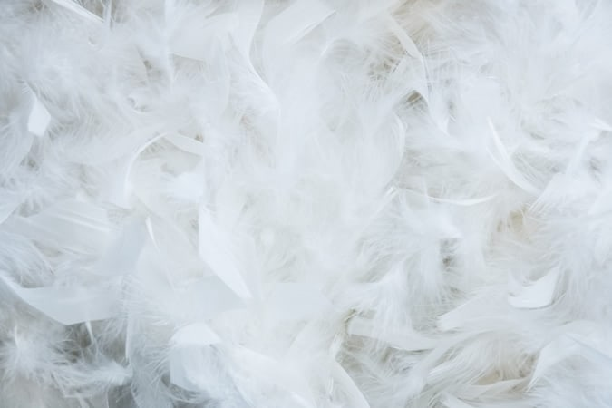 Close up of down feathers